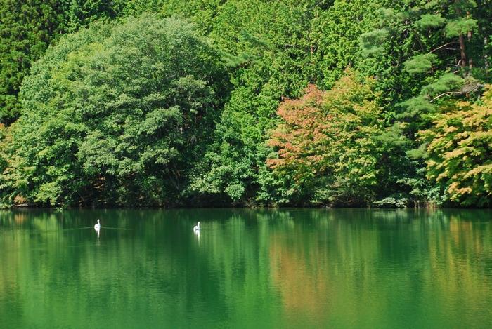 伊奈ヶ湖と白鳥9