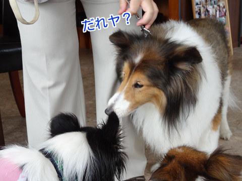 ご挨拶(ネオたん&ユキ)