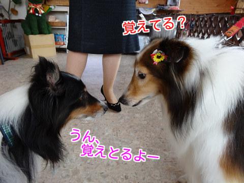 ご挨拶(パールちゃん&ユキ)