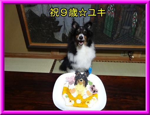 祝9歳☆ユキ