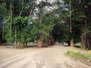パプアニューギニア 006