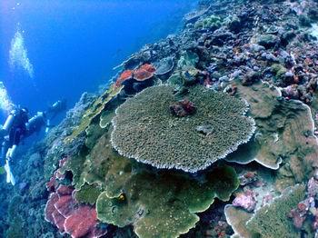 パプアニューギニア 010