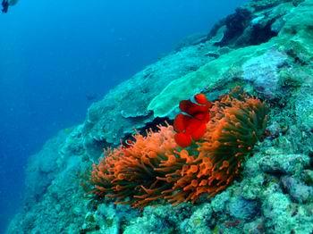 パプアニューギニア 016