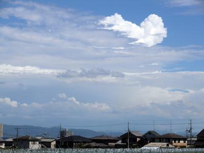 プードル雲