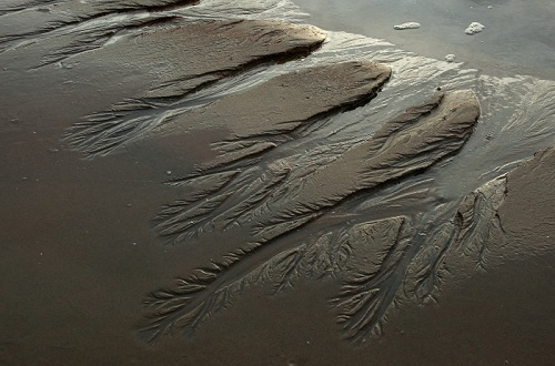 アジアの砂紋