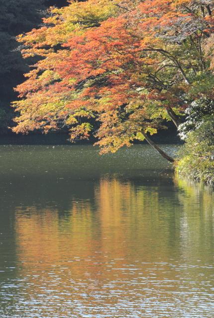 鎌北湖の輝き