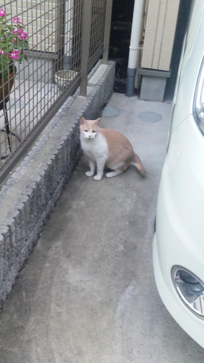 CAT_20110805
