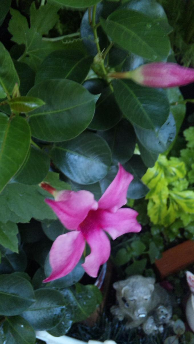Flowers20110805