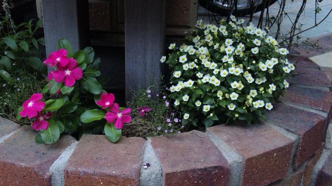 Flowers_20110806