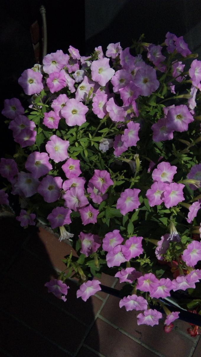 Flowers_20110808