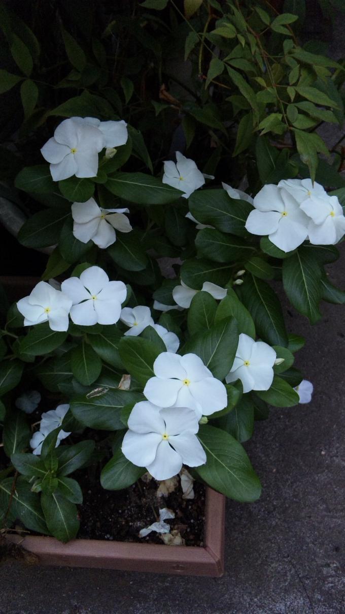 Flowers_20110814
