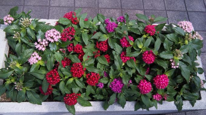 Flowers_20110816