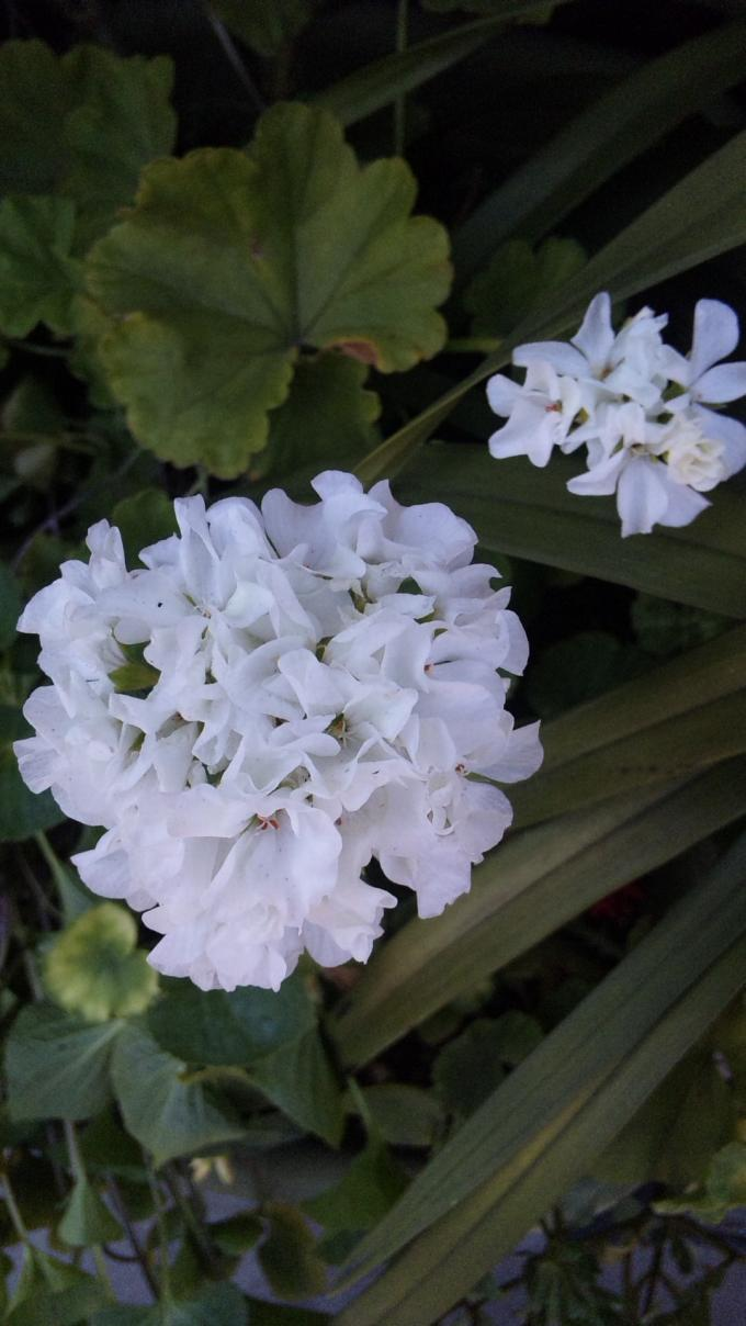 Flowers_20110818