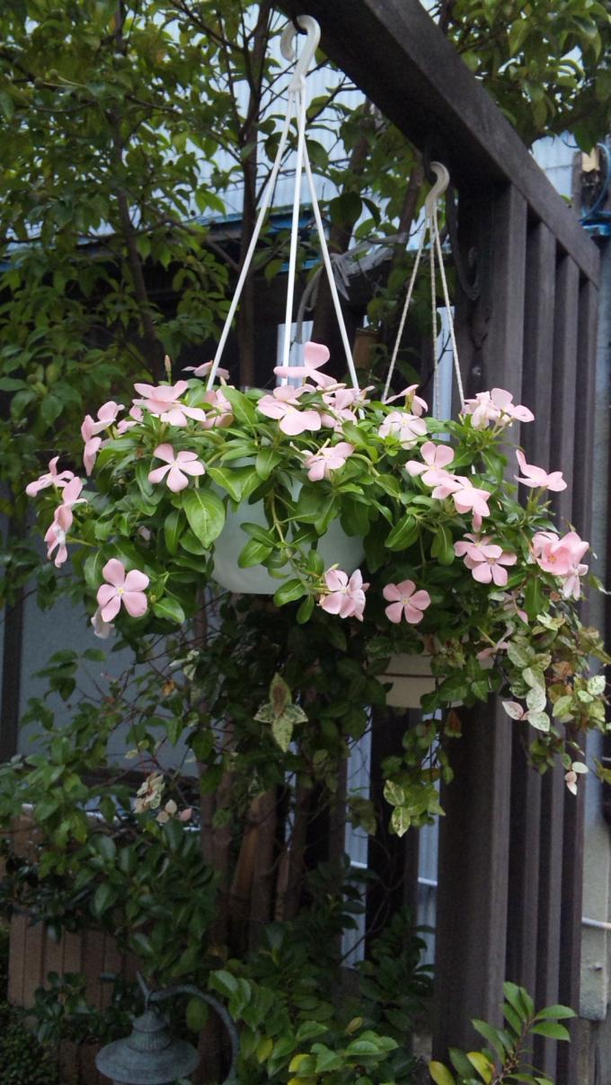 Flowers+46+(1)_convert_20110821210959.jpg