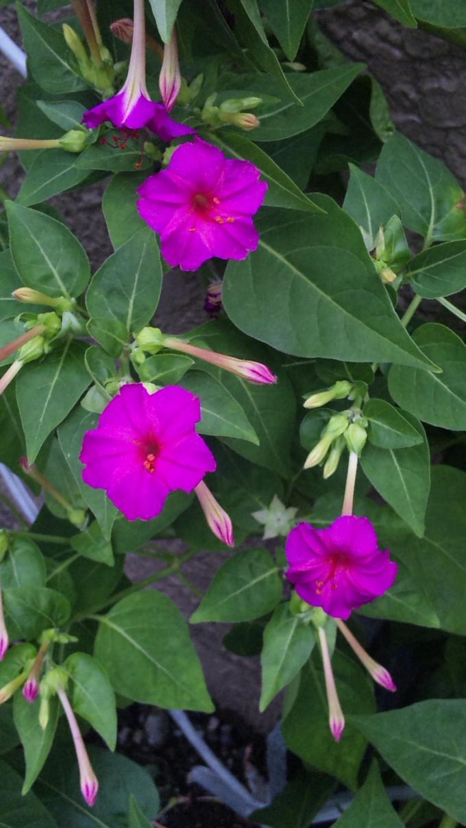 Flowers_20110820