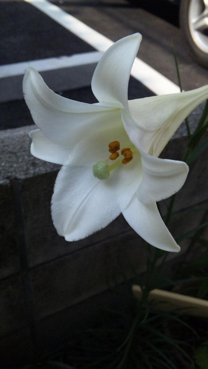 YURI_20110818