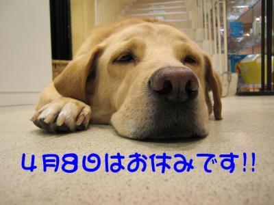 CIMG0004_20100407175735.jpg