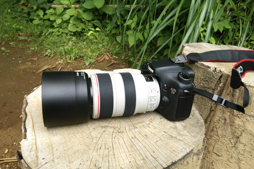 Canon EOS 7D + EF70-300mm F4-5.6L IS USM