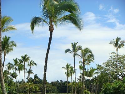 ハワイ島2日目 1日観光 055