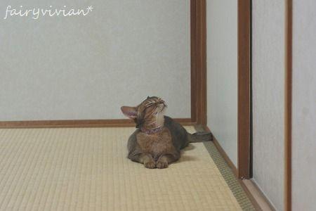 vivian110809 5