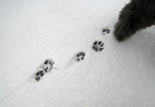 足跡だいっ