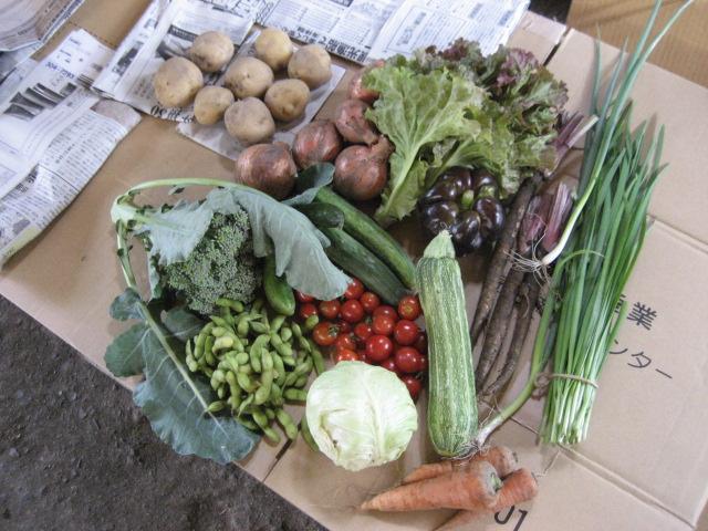 豆の木の野菜宅配セット