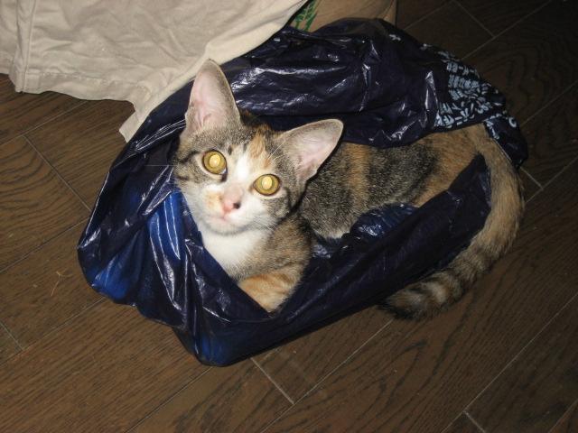 子猫のなーちゃん