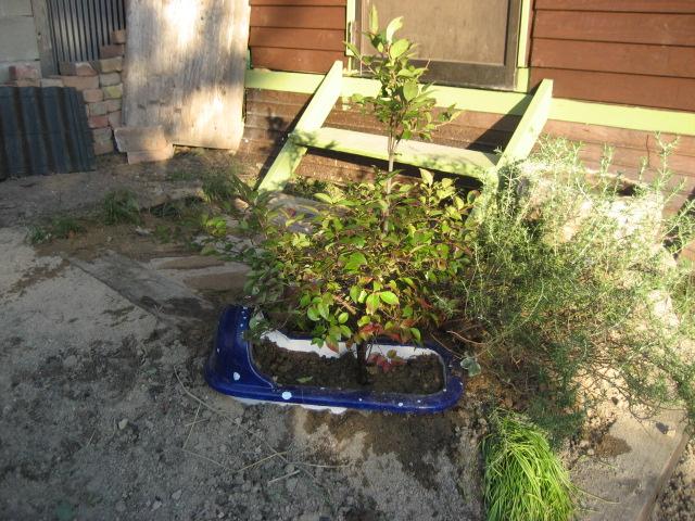 果樹を植えた便器