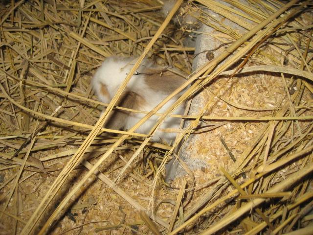 ウサギのあかちゃん