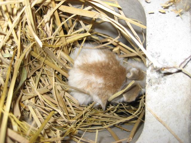 ウサギのあかちゃん 2