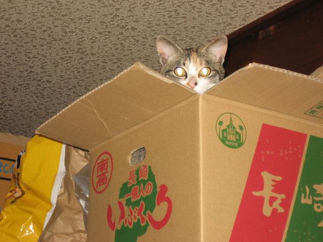 猫のなーちゃん