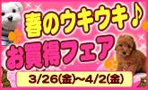 0326_ukiuki_165100.jpg