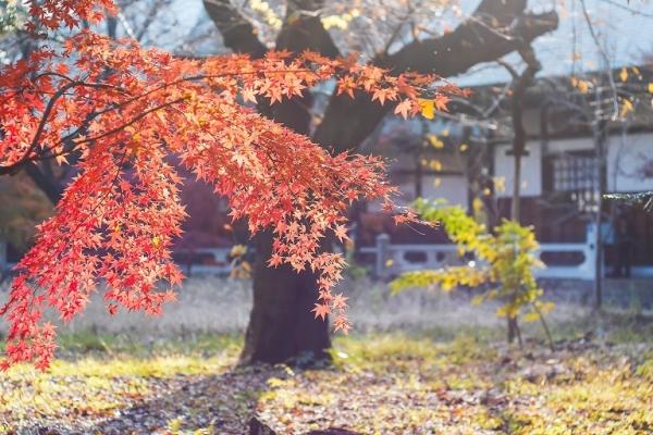 風景写真・秋