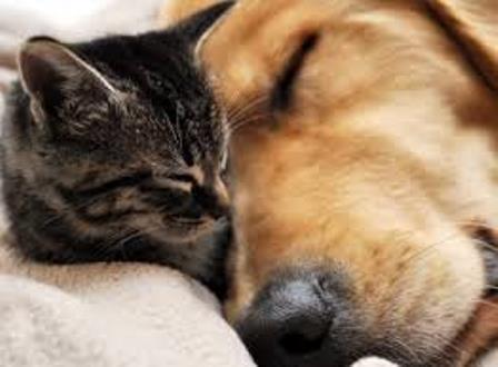 仲良く、犬と猫