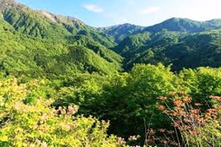 日本の森2