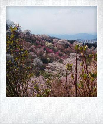 hanamiyama