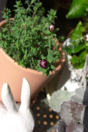 花かんざし2.8A