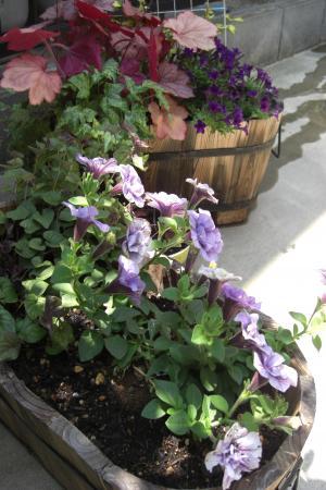 ペチュ紫6.6