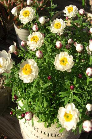 花かんざし12.31