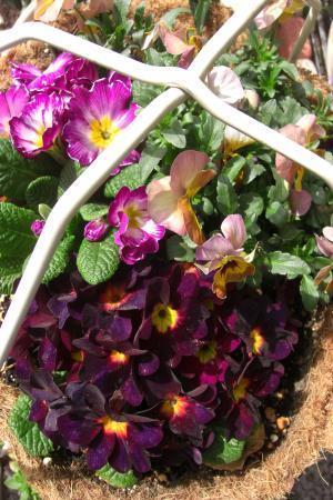 花かご2011.3