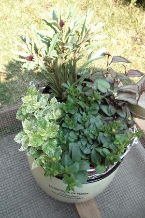 購入植物11.5.19