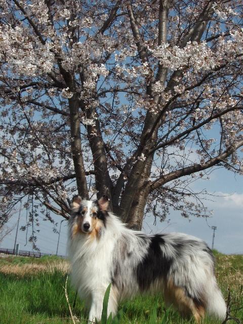 """テーマは""""珍獣デコぽん""""と桜の木?"""
