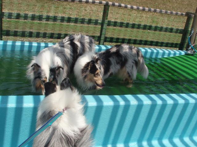 ウィンと日生ちゃんはプールに入ってるし~