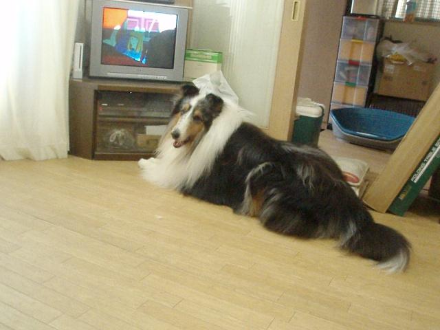 ボクはテレビ観てますから・・・何か問題でも?