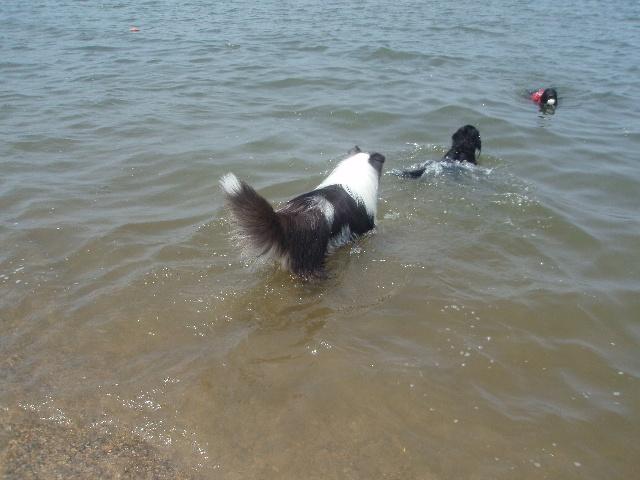 ホーひゃんが始めて水の中に入った時の写真!