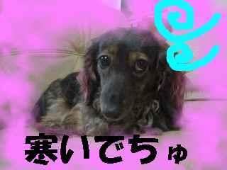 PC040002.jpg