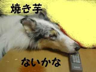 PC180014.jpg