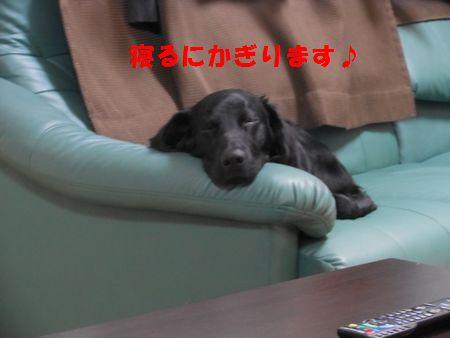 007_20111223005318.jpg