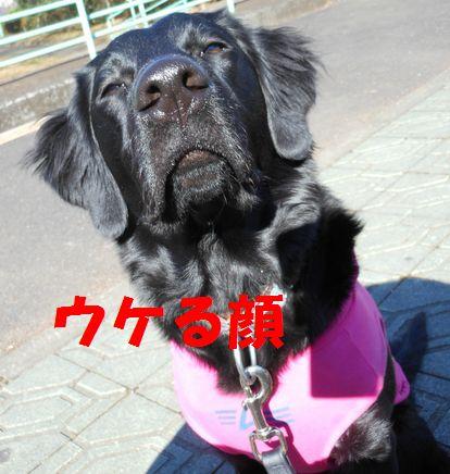 007_20120220181010.jpg