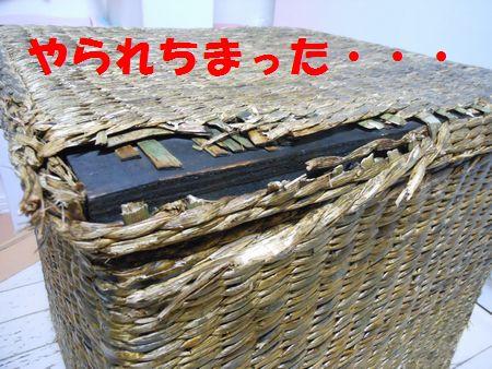009_20111205113908.jpg